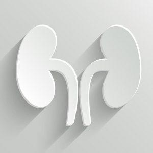 image symbolisant les reins